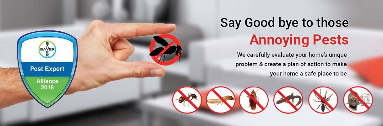 Pest Control in East Delhi Laxmi Nagar, Noida, Ghaziabad, Rodent